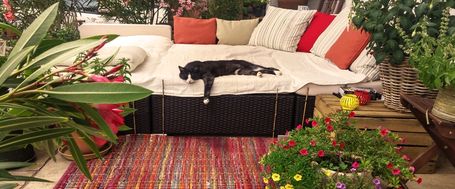 LiNAs Katze Lilly | Foto: © Lina Bibaric
