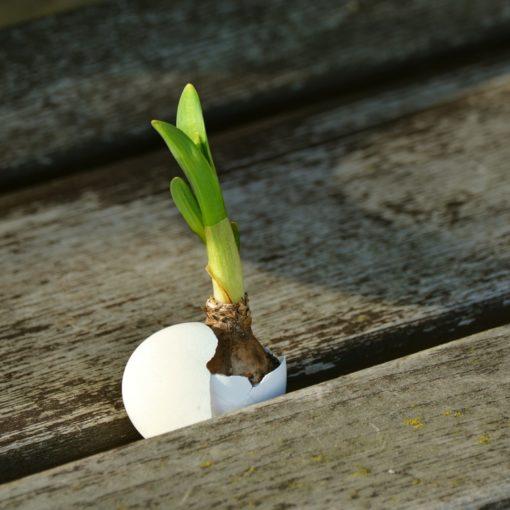 Blume sprießt aus Holz. Foto: Pxhere, CC.